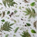 Herbs! @julieskitchen